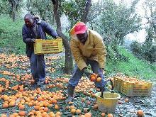 agricoltura_caporalato
