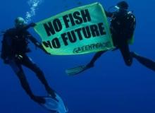 greenpeace-mare-pesca