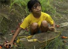 olio-di-palma-sfruttamento-minorile