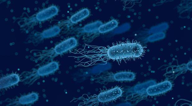 Listeria, cos'è e come difendersi