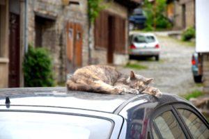 gatto su auto