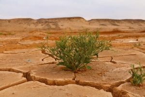 suolo arido e pianta verde