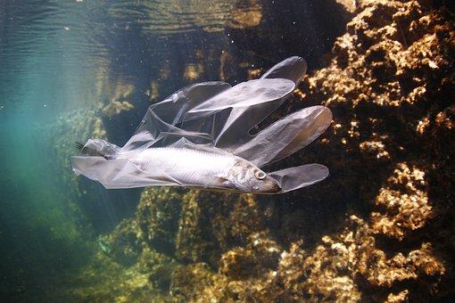 Plastica nell'oceano, Cnr: difficile fare previsioni sul ciclo dei rifiuti