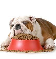 Obesità e animali domestici