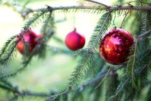 Alberi di Natale, naturali è meglio