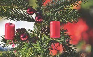 Consigli utili su come scegliere l'albero di Natale