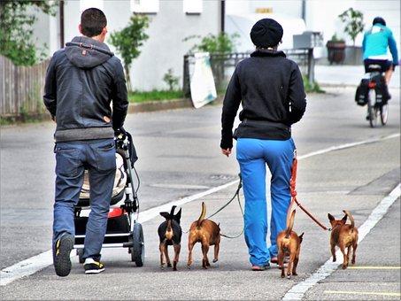 Animali in città, il Rapporto di Legambiente