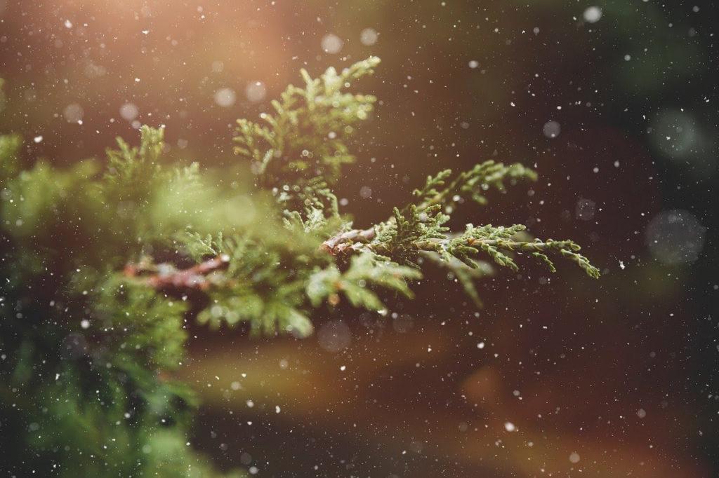 Alberi di Natale, scegliamoli sostenibili