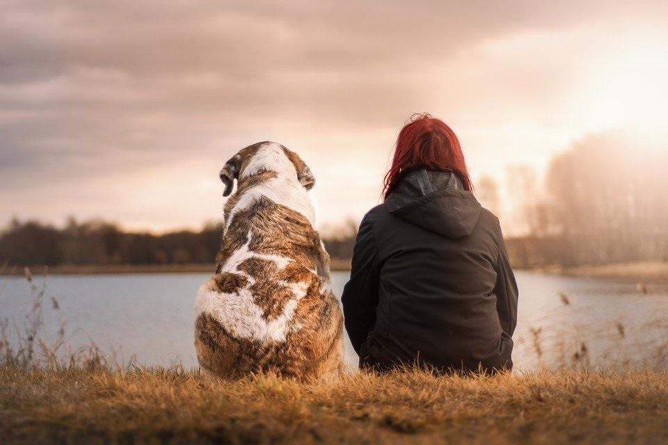 cane amici