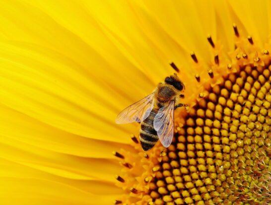 """Stop pesticidi, lettera aperta di """"Salviamo le api"""" ai decisori italiani"""