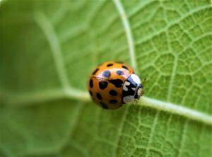 biodiversità Programma LIFE
