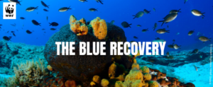 blue recovery