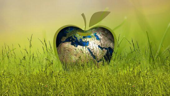 Spesa green, volano i prodotti senza antibiotici e con imballaggio compostabile