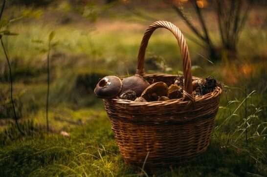 Tempo di funghi, le regole per una raccolta in sicurezza. Cosa fare in caso di intossicazione
