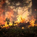 Emergenza incendi, WWF: solo il 4% è dovuto a cause naturali