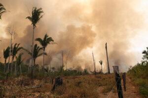 amazzonia incendip