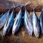 Iodio e pesce