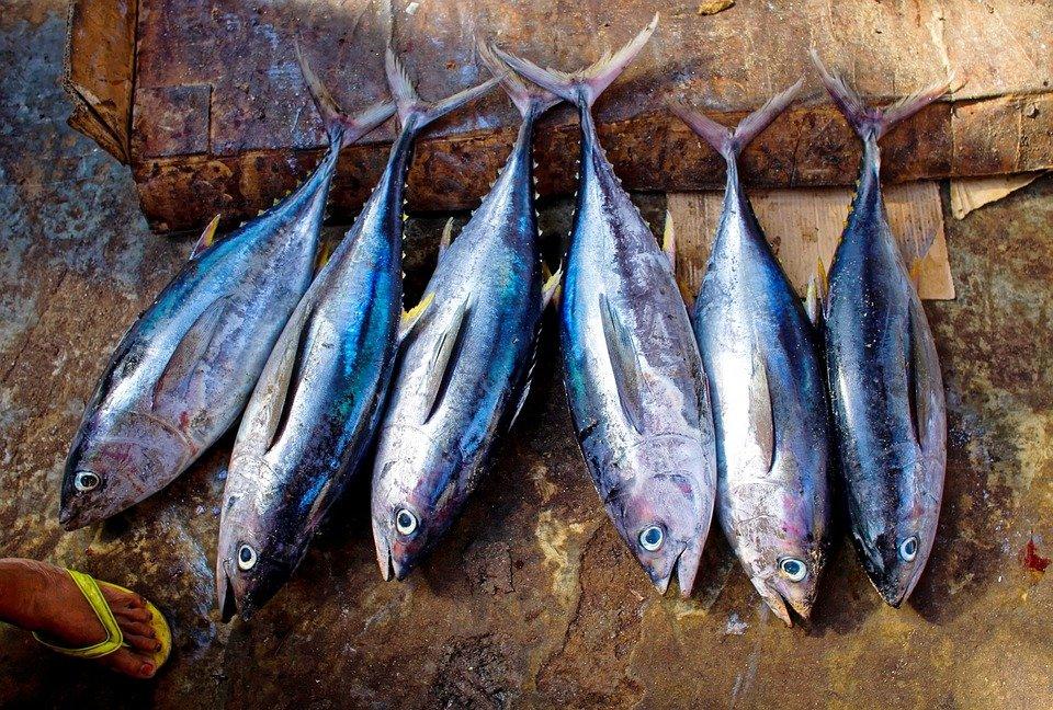 Pesce e metalli pesanti
