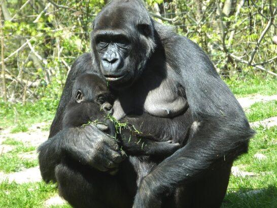 Living Planet Report WWF: in declino due terzi degli animali selvatici