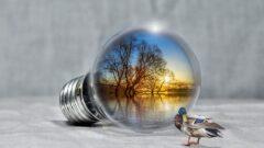 Specie protette e habitat, la valutazione dello stato della natura nell'UE