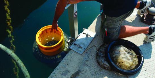 """""""Le nostre acque"""", si chiude la prima parte della campagna di Coop e LifeGate"""