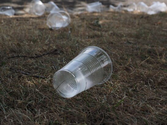 Plastiche compostabili per i contenitori per alimenti, via libera del Senato