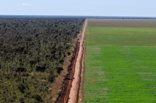 Deforestazione, WWF: per l'80% è legata ai nostri stili di vita