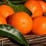 Crisi Clementine, Coop interviene a sostegno dei produttori agricoli calabresi