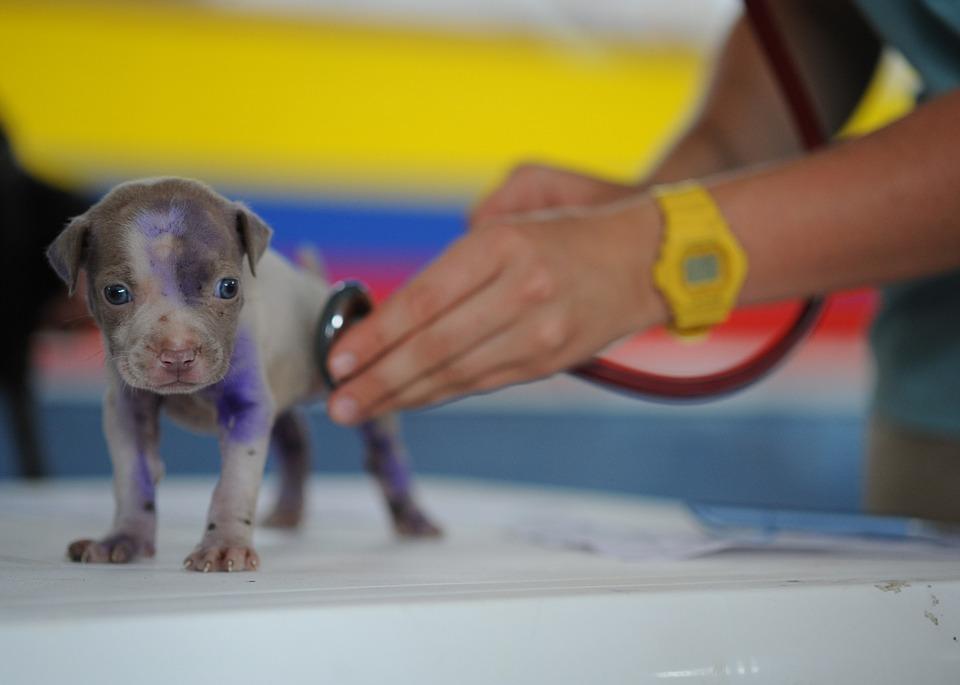 Cura animali, i veterinari potranno prescrivere farmaci per uso umano