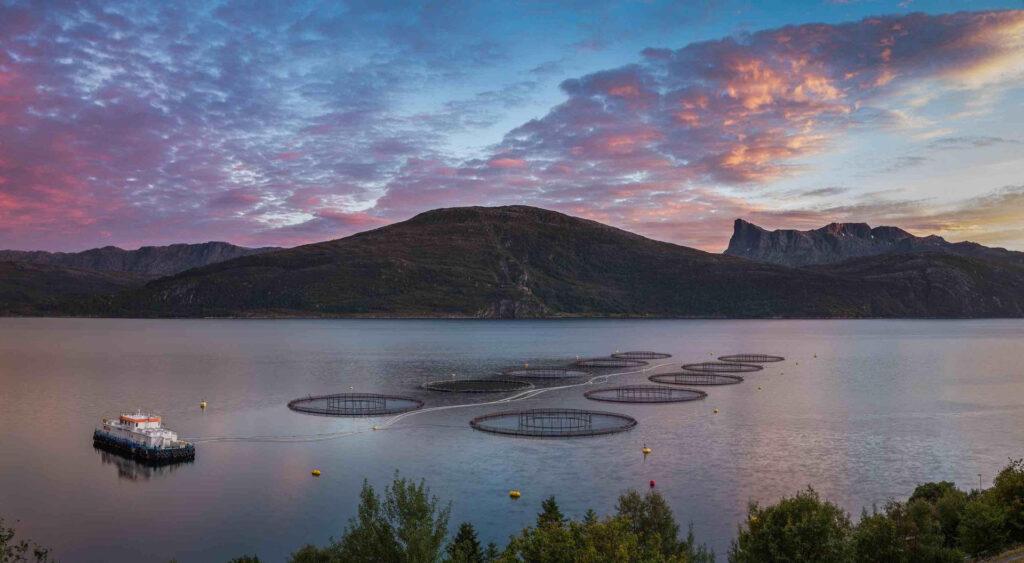 Prodotti ittici, il decalogo di MSC Pesca Sostenibile per un consumo responsabile