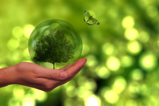 Greenwashing, ingannevole la metà dei claim ecologici trovati online