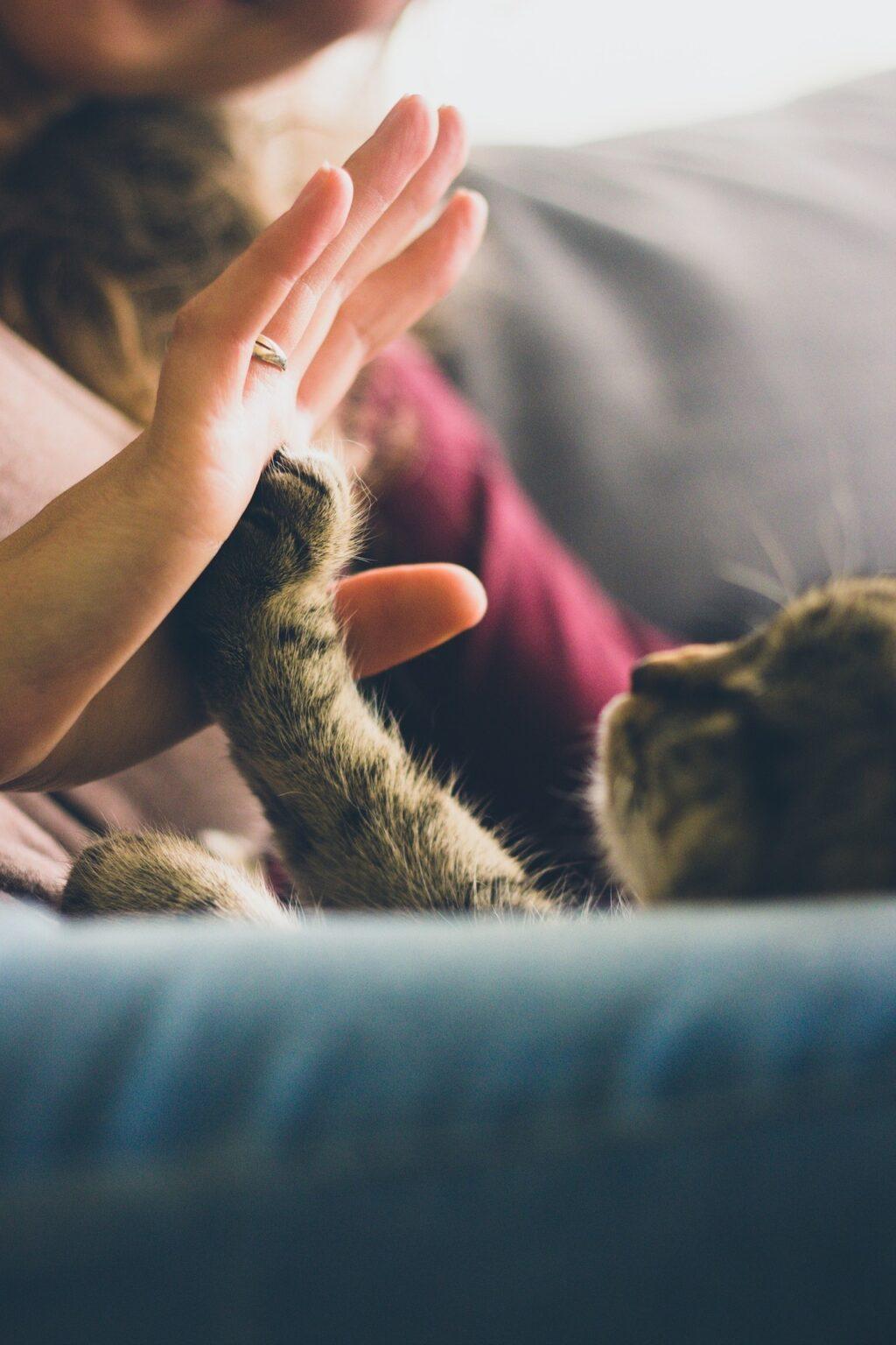 Oggi la Giornata Nazionale del Gatto, credenze e falsi miti da sfatare sul suo benessere