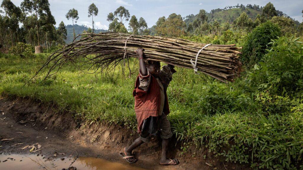 Lavoro minorile, il numero di bambini sale a 160 milioni (Fonte: UNICEF)
