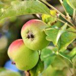 Pesticidi, WWF: votare sì al referendum in Trentino per la creazione del Biodistretto